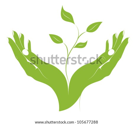 The silhouette of young plant in female hands. A concept - the beginning of new life. Vector. - stock vector