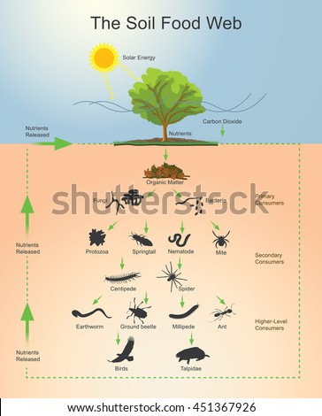 Soil food web community organisms living stock vector for Is soil living