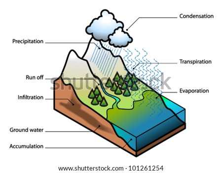The Water Cycle Showing Evaporation Transpiration Condensation Precipitation Run Off Infiltration