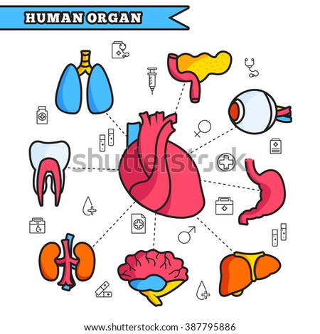Infographic Ideas infographic lines : Thin Lines Style Human Organs Set Stock Vector 387795886 ...