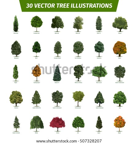 Mesquite tree stock images royalty free images vectors for Types of trees and their meanings