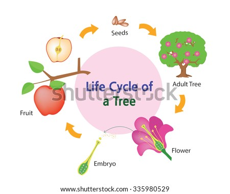 Fruit Life Cycle Diagram Find Wiring Diagram