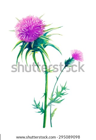 thistle vector watercolor - stock vector
