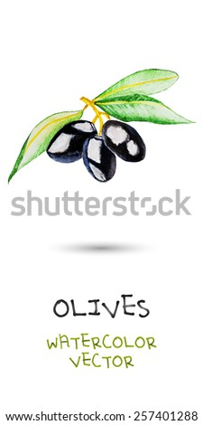 three black watercolor olives on green branch with lives. vector version - stock vector
