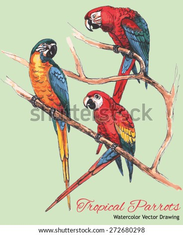 Three Bright Macaw Parrots on a Branch (Watercolor Vector Drawing) - stock vector