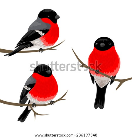 Three bullfinches on the branches. Vector illustration. - stock vector