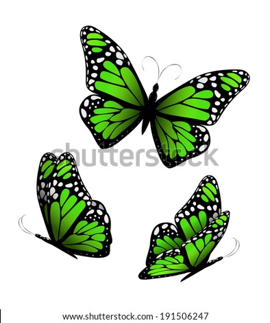 Three butterflies in green tones. Vector