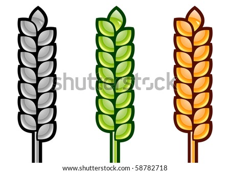 three color corn isolated on the white - stock vector