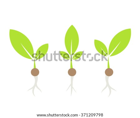 Three little plants. Vector illustration