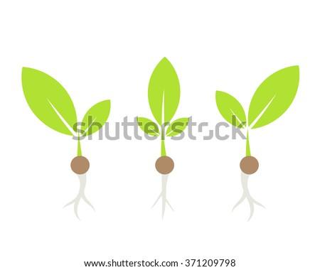 Three little plants. Vector illustration - stock vector