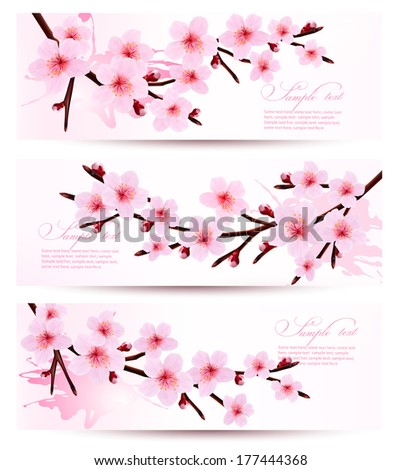 Three spring banners with blossoming sakura branches. Vector illustration.  - stock vector