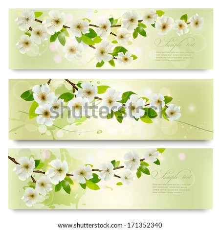 Three spring banners with blossoming tree brunch with spring flowers. Vector illustration.  - stock vector