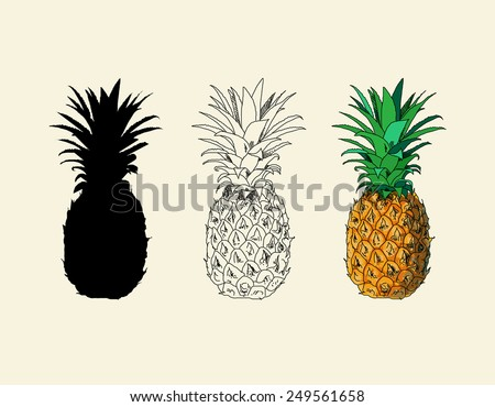 Three types of drawing pineapple (silhouette, lines, colored)