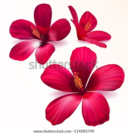 Three vector realistic purple flowers