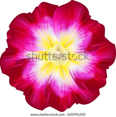 Three vector realistic purple flowers primrose  - stock vector