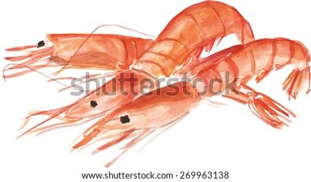 Three watercolour shrimps, vector drawing - stock vector