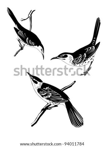 thrush silhouette on white background, vector illustration - stock vector