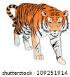 Tiger, Orange, Black and White, vector illustration - stock vector