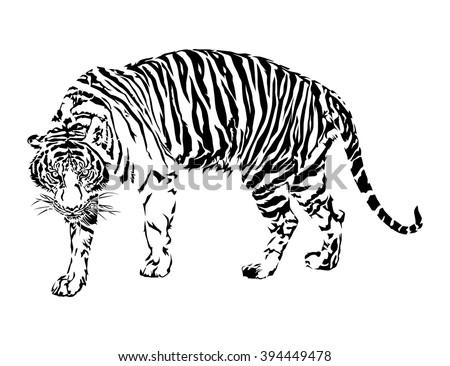Tiger walking, black and white color, illustration design. - stock vector