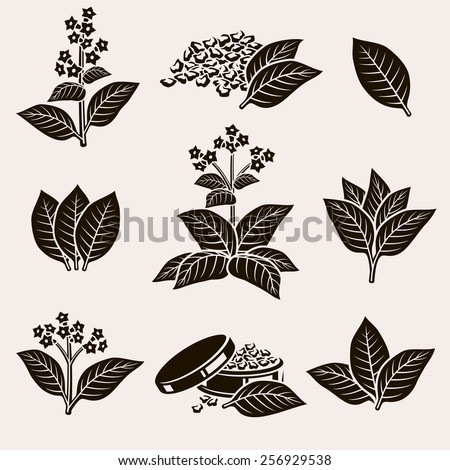 Tobacco leaf set. Vector - stock vector