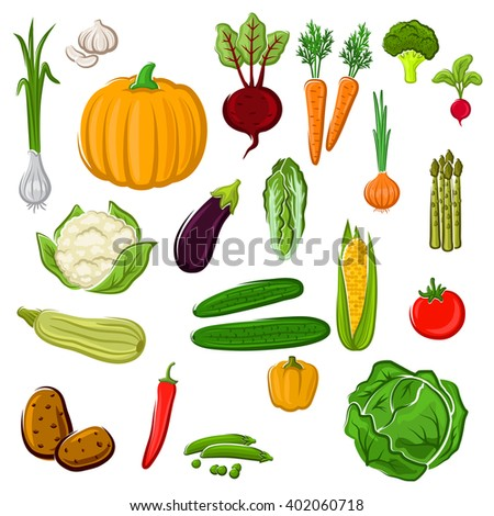 Tomato and pepper, eggplant and cabbage, corn, potato, onion, pumpkin, beet, carrot, broccoli, cauliflower, garlic, radish, asparagus and green pea, cucumber, chinese cabbage and zucchini vegetables