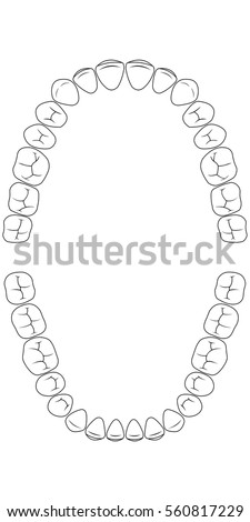 Tooth Chart Teeth, The Chewing Side Of The Teeth Of Man , Chart For Dental