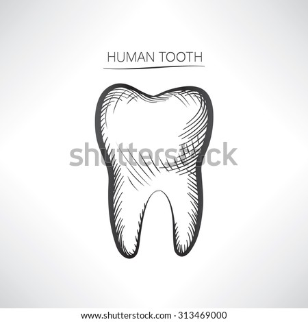 Tooth isolated. Tooth hand drawn sketch icon. Tooth symbol. - stock vector
