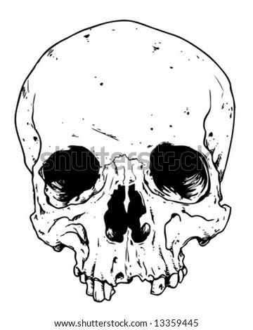 toothless skull vector