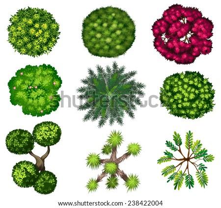 Top tree - stock vector
