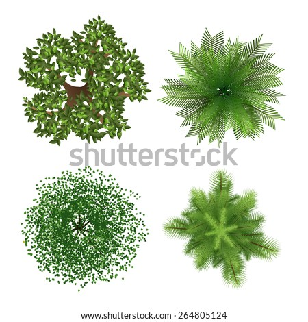 Top view tree elements for landscape design on white background - stock vector
