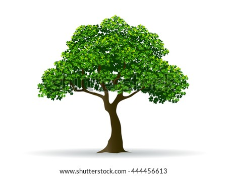 tree and leaf branchrealistic treevectorcanopy  sc 1 st  Shutterstock & Canopy Tree Stock Images Royalty-Free Images u0026 Vectors   Shutterstock