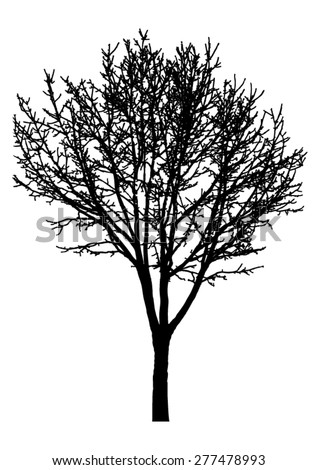 Tree, bare branches. Black silhouette, on white background. isolated vector