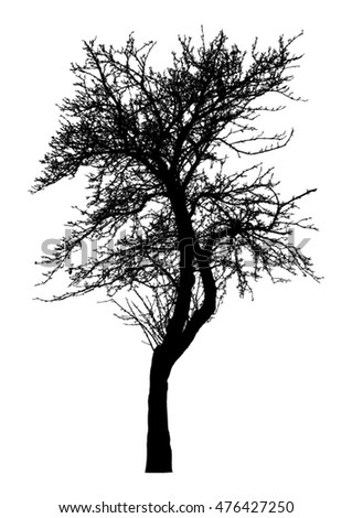 Tree - bare branches - black silhouette - on white background - isolated vector