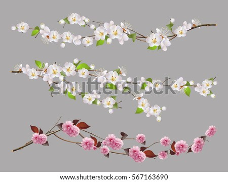 Tree branch, spring flowers. 3d vector set