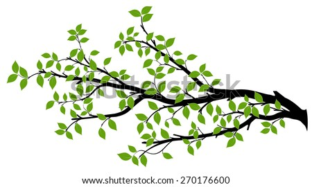 Tree branch with green leaves over white background. Vector graphics. Artwork design element. - stock vector