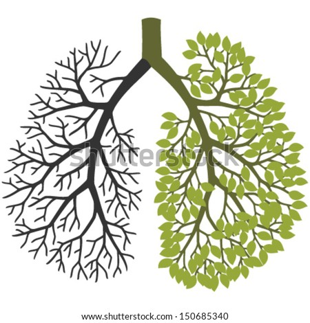 Tree branches like the lungs. One branch without leaves, the other with leaves.
