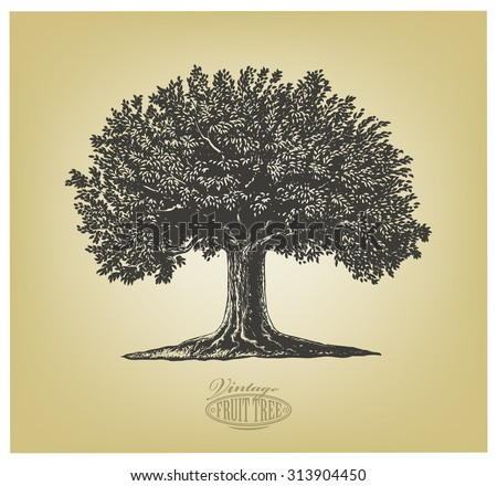 Tree in engraving style.  Vector illustration of a fruit tree in vintage engraving style. Isolated, grouped.  - stock vector
