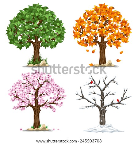 Tree in four seasons - spring, summer, autumn, winter. Vector illustration. Isolated on white background. - stock vector