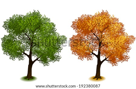 Tree. Isometric trees in vector (Four Seasons series)