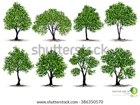 tree on white background,Vector trees in silhouettes. Create many more trees with leaves and bare trees on the bottom,Set of abstract trees,Green Oak, decorative branch silhouette and green leaves - stock vector