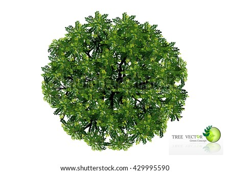 Tree  top view,Tree Branch Silhouettes,Tree branch with green leaves over white background - stock vector