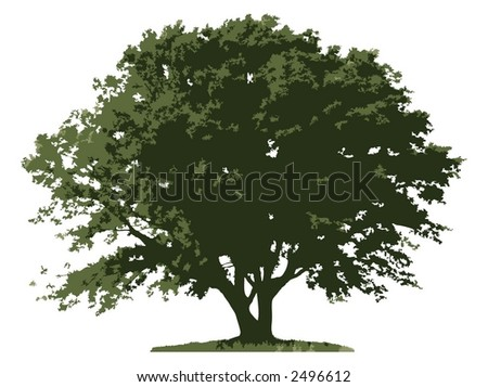 Tree (vector) - stock vector