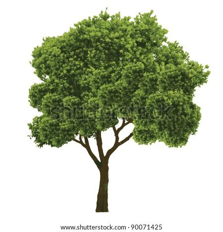 tree vector/illustration - stock vector