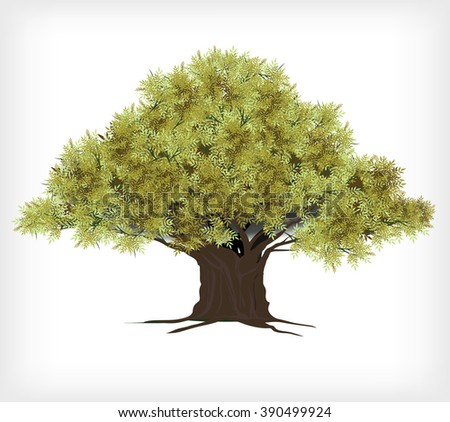 Tree with leave on white background,Vector tree drop shadow,Plant, nature and ecology