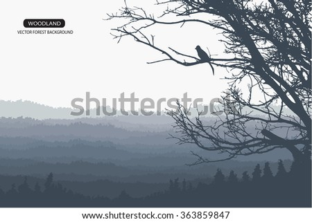Trees and branches silhouettes. Detailed vector illustration. Forest banner.