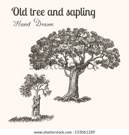 Trees hand drawn vintage engraved illustration stock vector royalty trees hand drawn vintage engraved illustration old tree and sapling thecheapjerseys Gallery