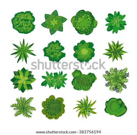 Trees  top view. Easy to use in your landscape design projects. Set of images of plants of different varieties. Crowns of natural. Nature  green spaces. The sight from the helicopter