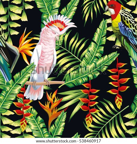 Tropical Birds Stock Images Royalty Free Images Vectors