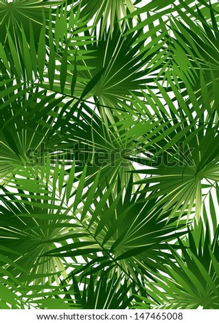 Tropical Cabbage palm - stock vector