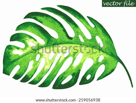 Tropical exotic leaf monstera. Vector illustration. - stock vector